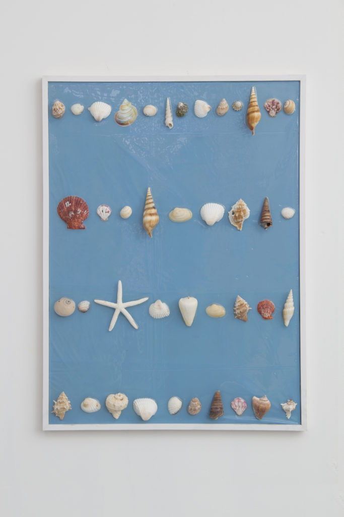 Ordered, Delivered, Arranged #1 2014 flatwork by Aaron King shells, resin, wood, plastic 24'' x 30''